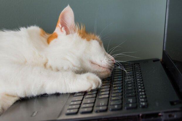 кошка, фото: BBC