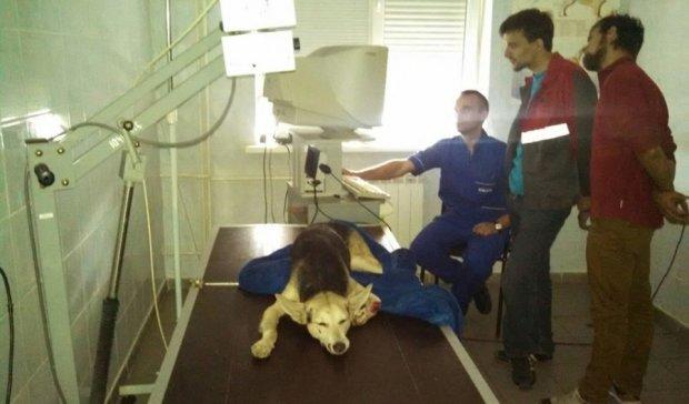 Водіям на замітку: що робити в разі ДТП із собакою