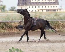 кінь збісився
