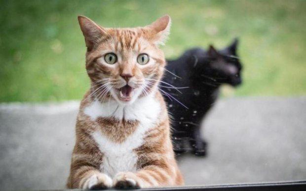Японський інженер перетворив кота на пилосос: відео