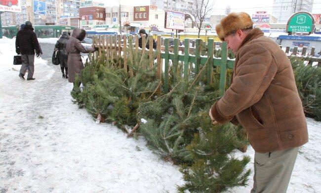 """Новый год на носу: сколько зеленых красавиц на Прикарпатье отправят """"на гильотину"""""""
