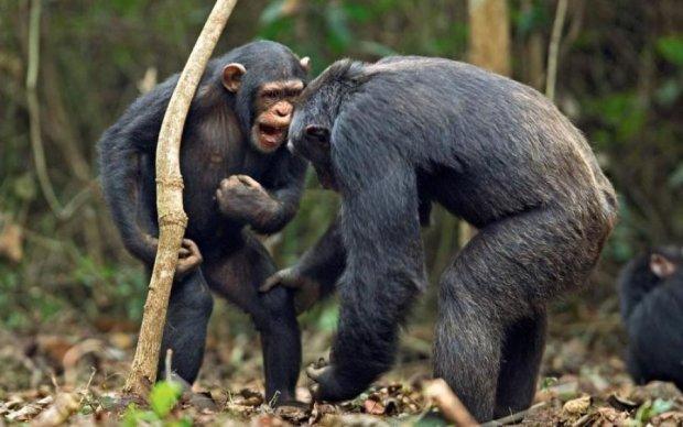 Людина глянула на світ крізь окуляри мавпи