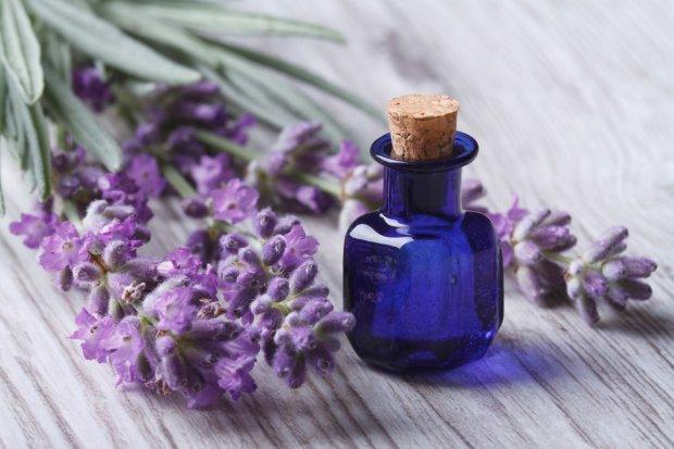 Бабушка говорила, наука подтвердила: этот полевой цветок лучше любого антидепрессанта