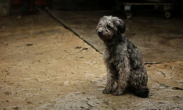 собака под дождем, скриншот из видео