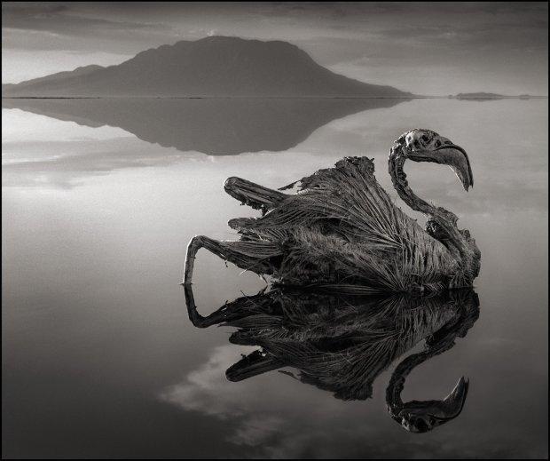 Натрон: жахливе інопланетне озеро Танзанії, яке перетворює все живе в мовчазні мумії