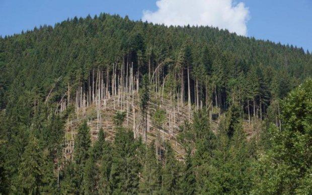 Порошенка просять захистити ліси