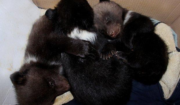 В Харьковском зоопарке родилось трое медвежат
