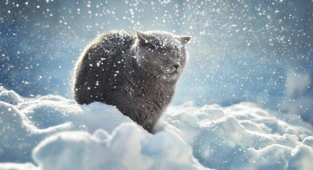 Котик, фото из свободных источников