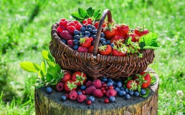 Вчені довели: лісові ягоди зроблять вас розумнішими