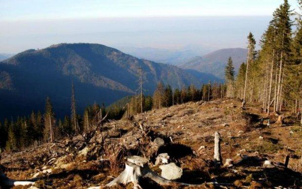 В сети показали, куда исчезает украинский лес: эпическое видео