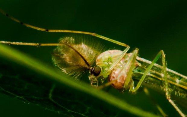 Вчені розкрили таємницю зору нічних комах