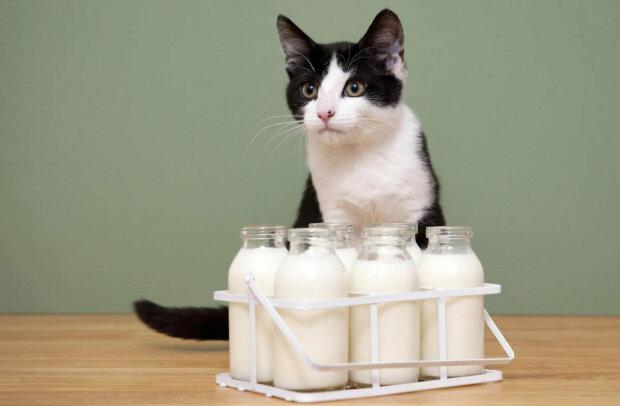 """В Днепре продают молоко для котов: """"золотое"""" лакомство разорит украинцев"""