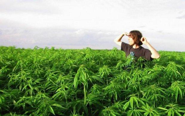 Стало известно, кто из украинцев мечтает о легализации марихуаны