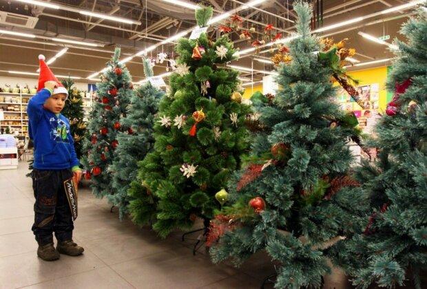Новогодняя елка, фото: 5 канал