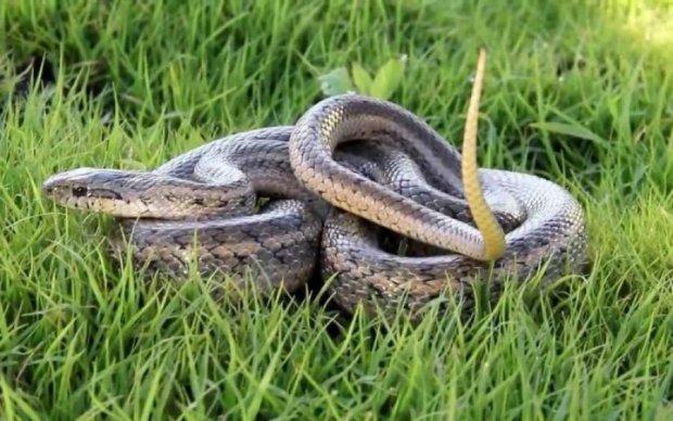 Душить своїх жертв: до квартири українців залізла змія