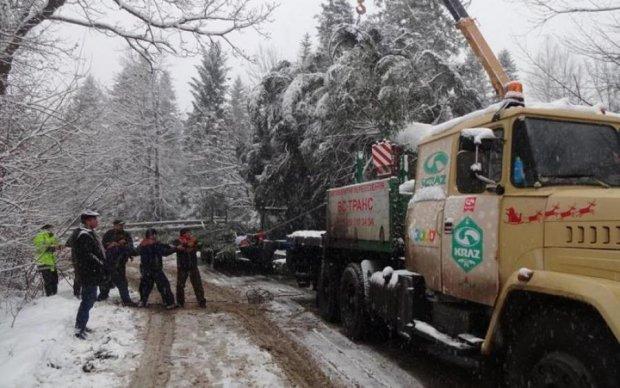Праздник отменяется? Главная елка страны застряла по дороге в Киев
