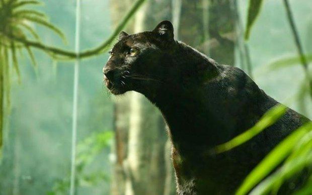 Эпическая битва аллигатора и ягуара порадовала мир: видео