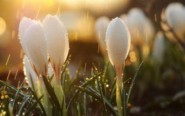 Квітковий тест до початку весни