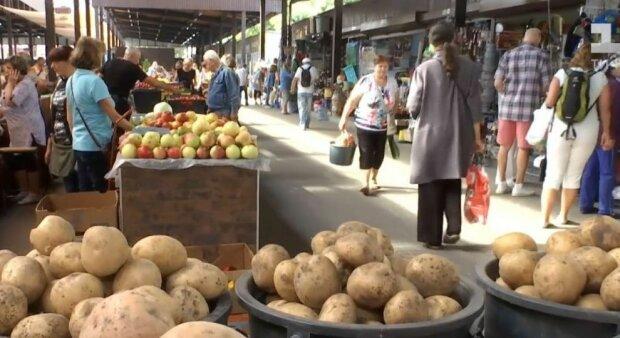 """Цены на """"второй хлеб"""" упали, но радоваться рано: фермеры рассказали, сколько будет стоить картошка"""