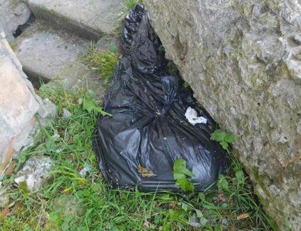 """У Тернополі невідомі розправилися з кошенятами: """"Знайшли пакет в опаришах"""""""
