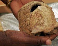 Homo erectus, фото: Getty Images