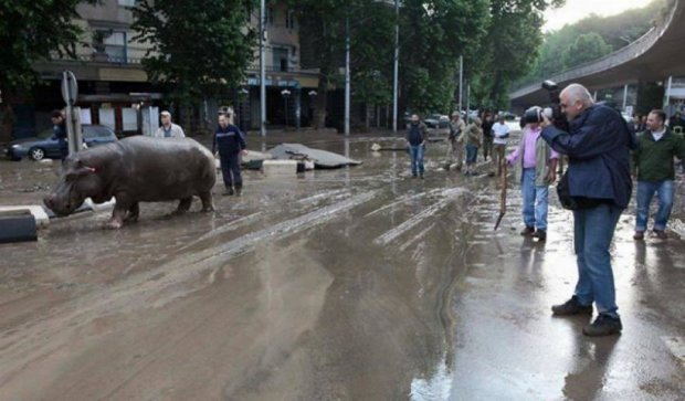 Через повінь в Грузії із зоопарку розбіглися тварини (фото)