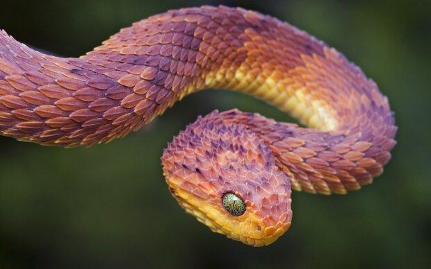 Вчені з'ясували, куди поділися кінцівки змій