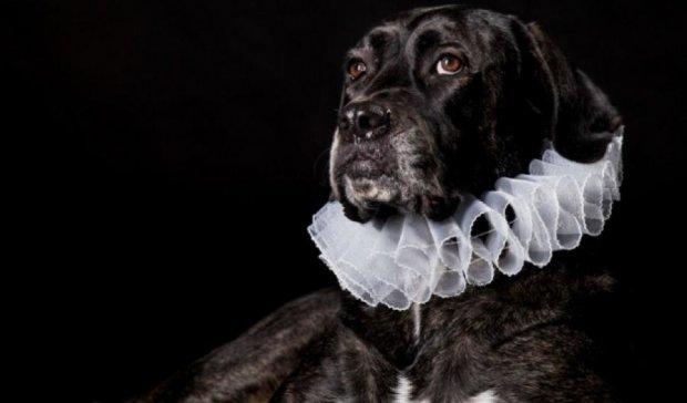 Такого вы еще не видели: собаки и коты-аристократы (фото)
