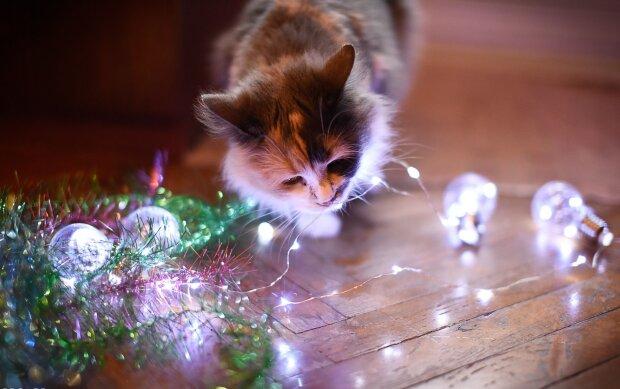 Лучшие анекдоты на субботу 28 декабря помогут подготовиться к Новому году