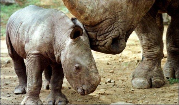 Більше половини тварин вимруть до кінця століття