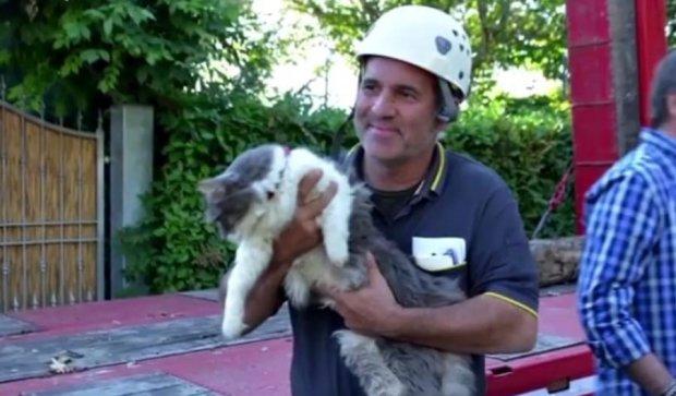 Невероятное спасение: кот прожил под завалами дома 32 дня