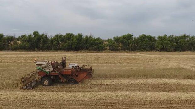 Аграрний сектор, скріншот: YouTube