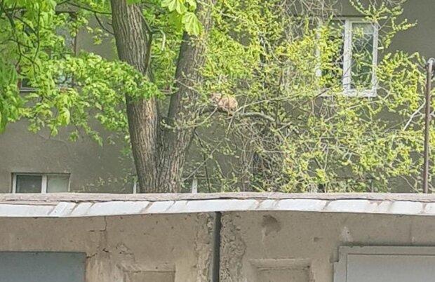 У Харкові врятували кота, фото: Facebook Порятунок тварин Харків