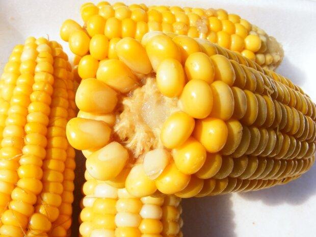 Зваріть кукурудзу за 5 хвилин без води, неймовірно швидкий спосіб
