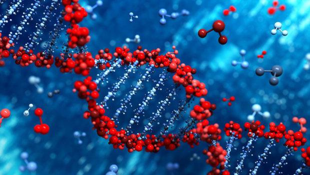 Вчені виявили ген витривалості