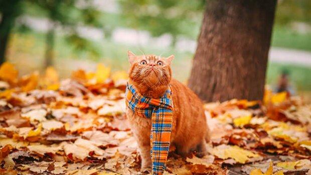 Котик восени, 24tv