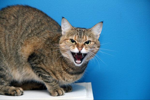 Скажений кіт, фото: 5 канал