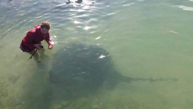 Одеситiв пiдстерiгає смерть у морi: одна зустрiч може стати фатальною, вдивляйтеся у воду