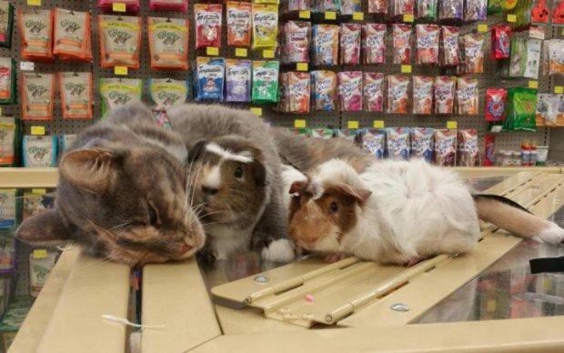 Котячий туалет у цукрі: реакція супермаркету здивувала