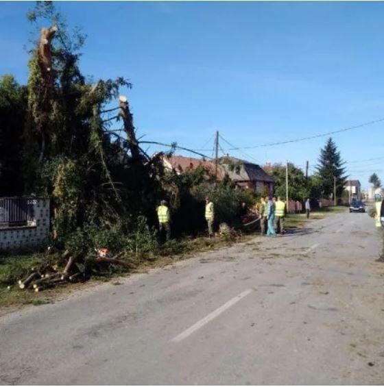 Торнадо на Закарпатті: перші кадри страшних наслідків стихії