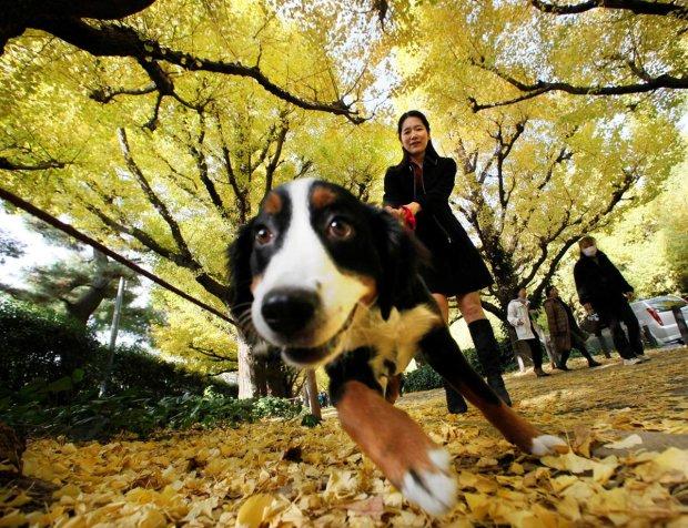 Собаки способны продлить жизнь человеку: ученые рассказали как