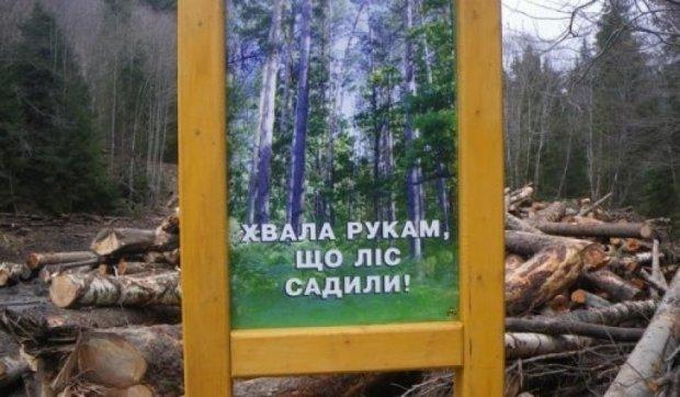 Бесценные леса Карпат вырубают на дрова (фото)