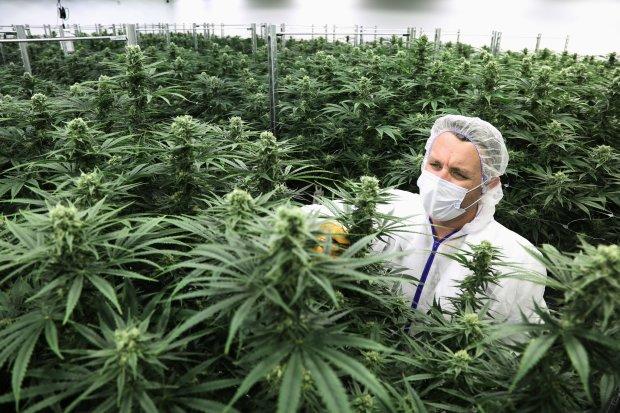 """У Раді одноголосно проголосували за легалізацію марихуани: """"Це право на життя"""""""