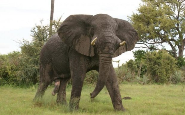 Індус жорстоко поплатився за селфі зі слоном