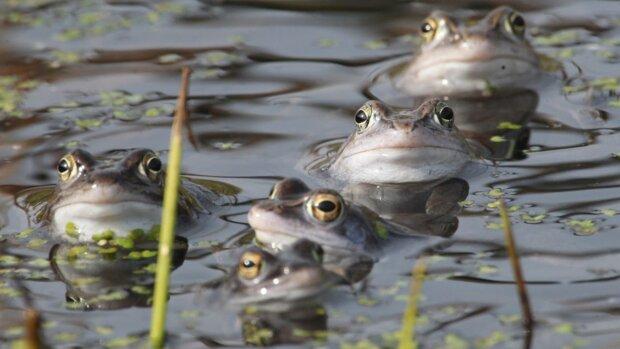 На Одещині повстали жаби