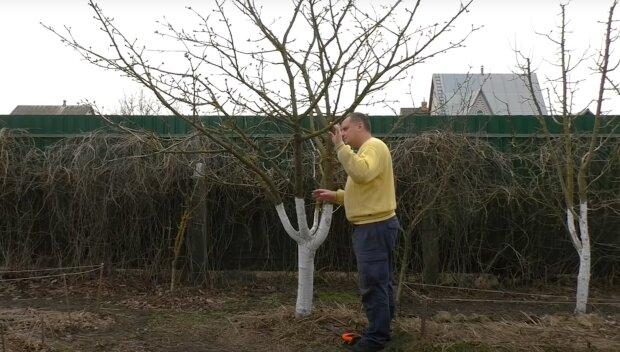 Обрезка дерева, скриншот: Youtube