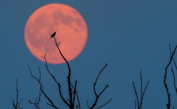 Клубничная Луна над Харьковом очаровала горожан: невероятная красота, фото