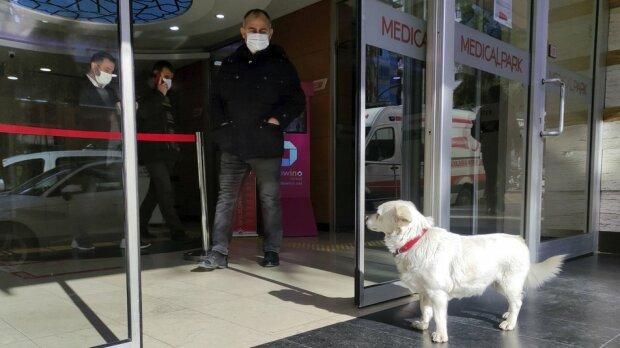 Турецький Хатіко, Фото Associated Press