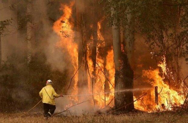 Пожежі з Австралії перекинулися на світ