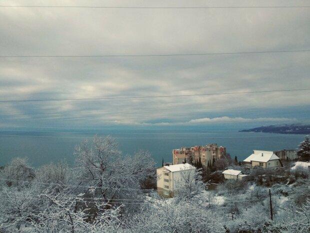 """Аномальна зима диктує свій графік: погода """"пробудила"""" дещо прекрасне, фото"""